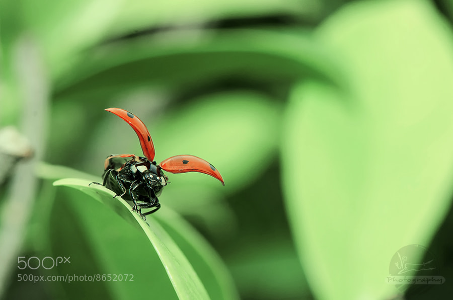 Photograph lights,camera and lady bird comes in action... by vineet sharma on 500px