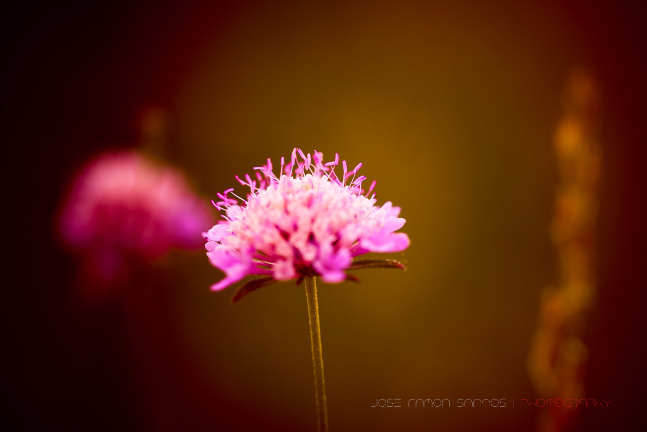 Photograph Spring flower in p&w by Jose Ramon Santos Mosquera on 500px