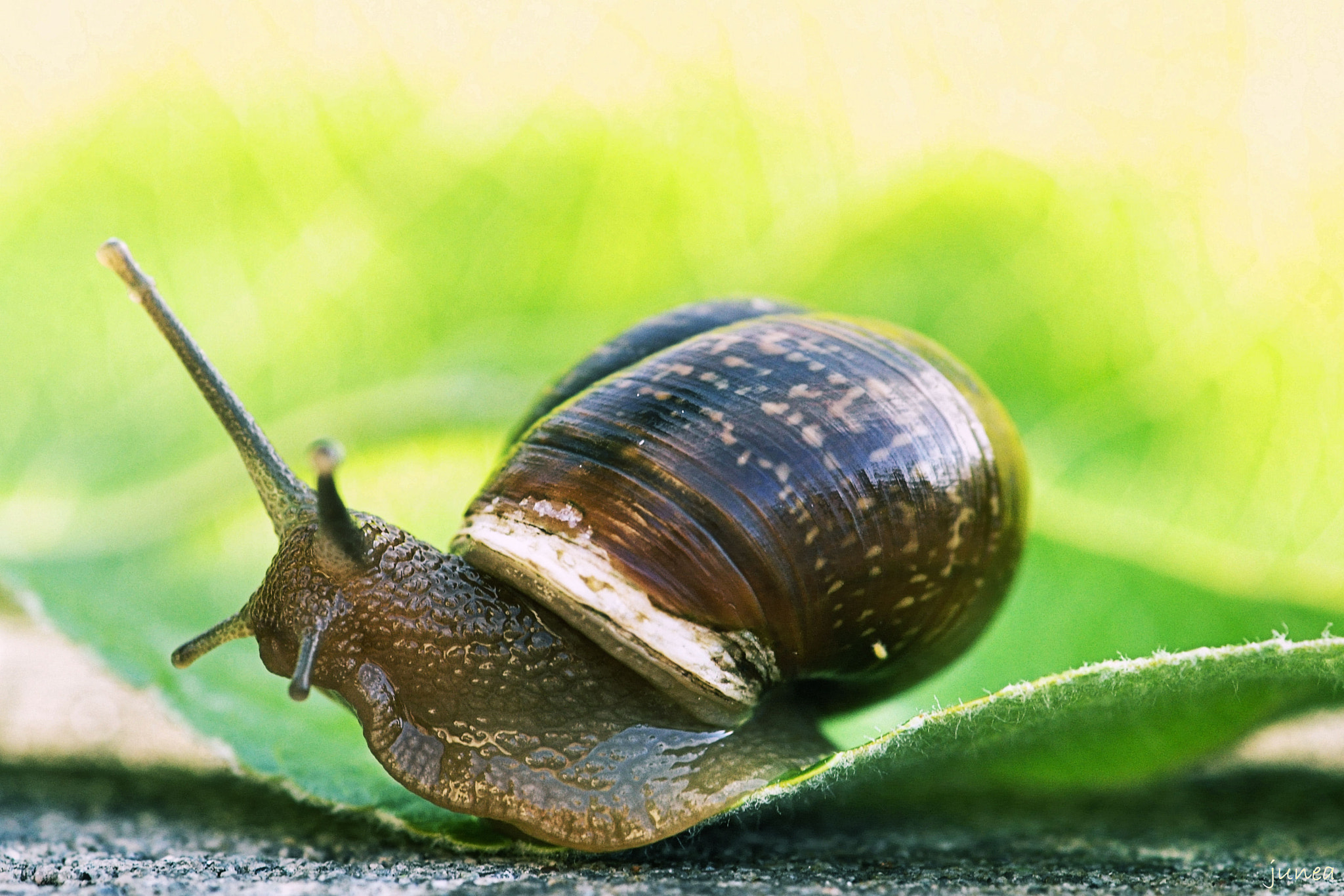 Photograph The Snail by June A on 500px