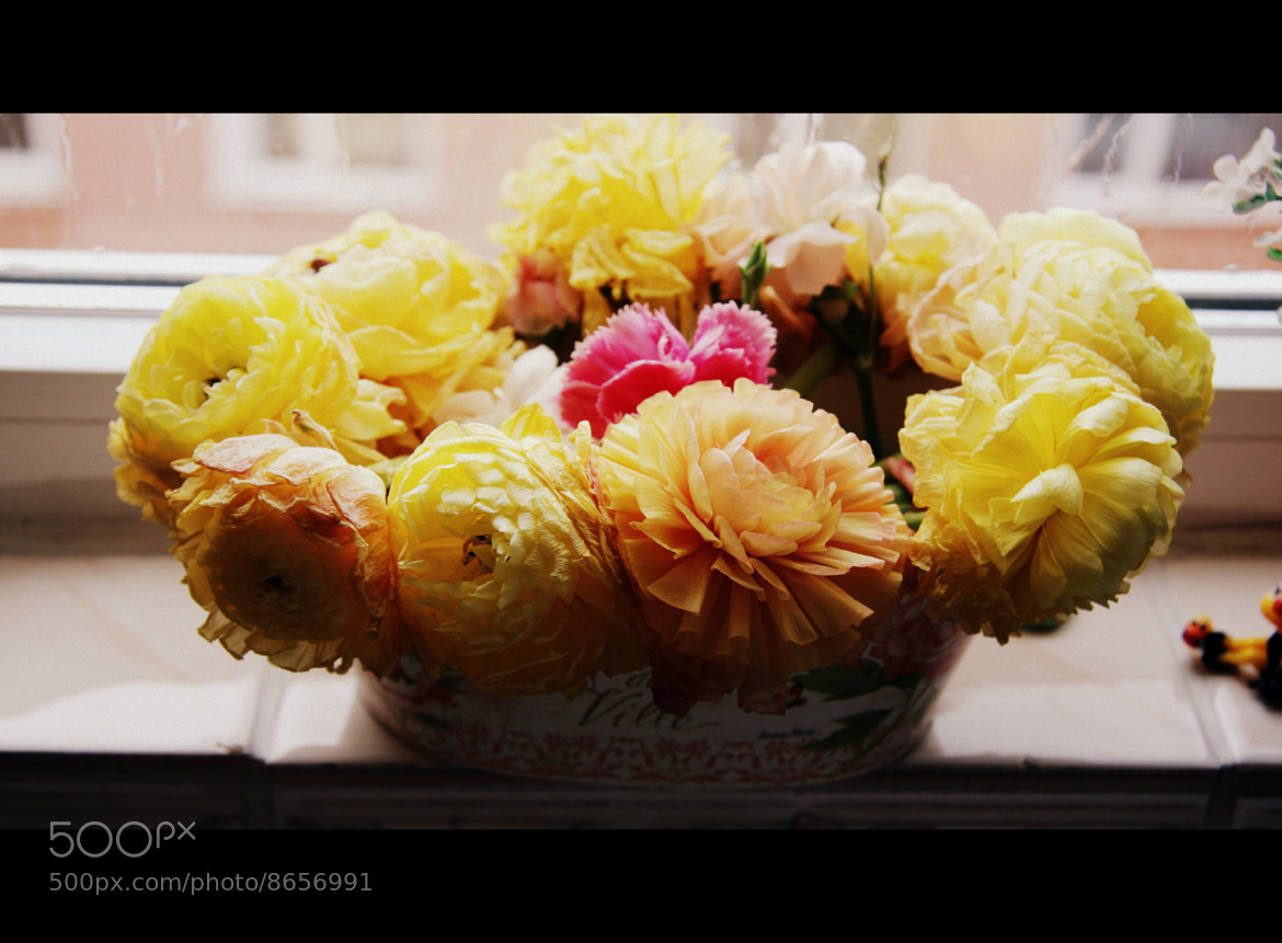 Photograph Roses in Various Colors by Erdi Sam on 500px