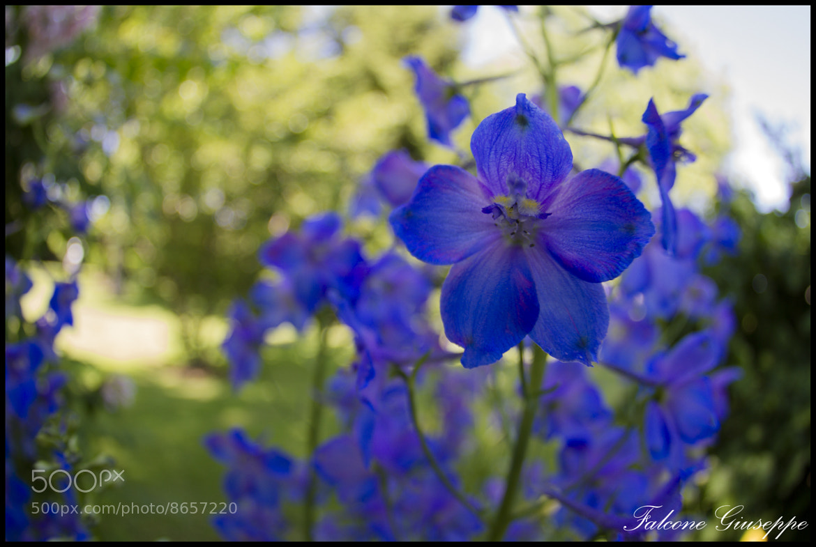 Photograph Flowers by Falcone Giuseppe on 500px