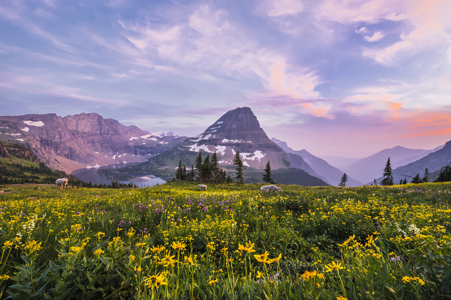 Hidden Lake - Glacier National Park by Sashikanth Chintla on 500px.com