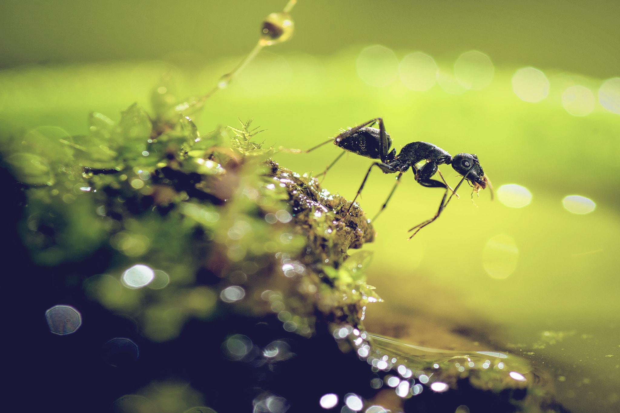 Photograph ant... by Bruce Wang on 500px