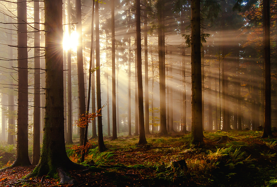 Photograph Sonnenstrahlen im Wald by Leo Pöcksteiner on 500px