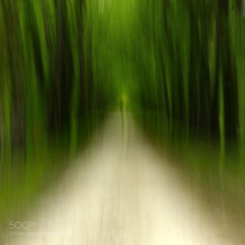 Photograph The path by Edouard de Castro on 500px