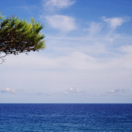 The tree that dominates the sea