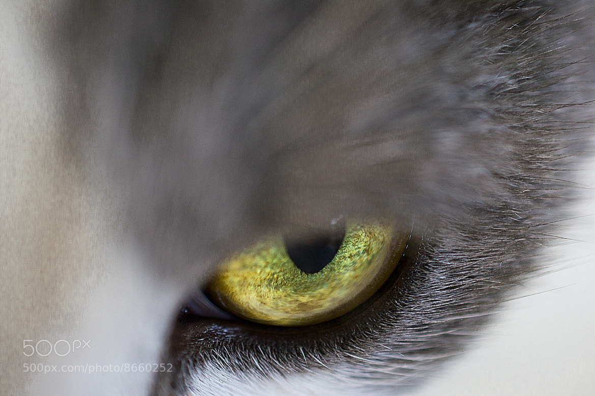 Photograph Monster Eye by Salmen Bejaoui on 500px
