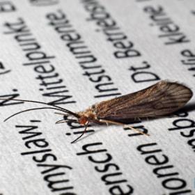 Motte / Moth