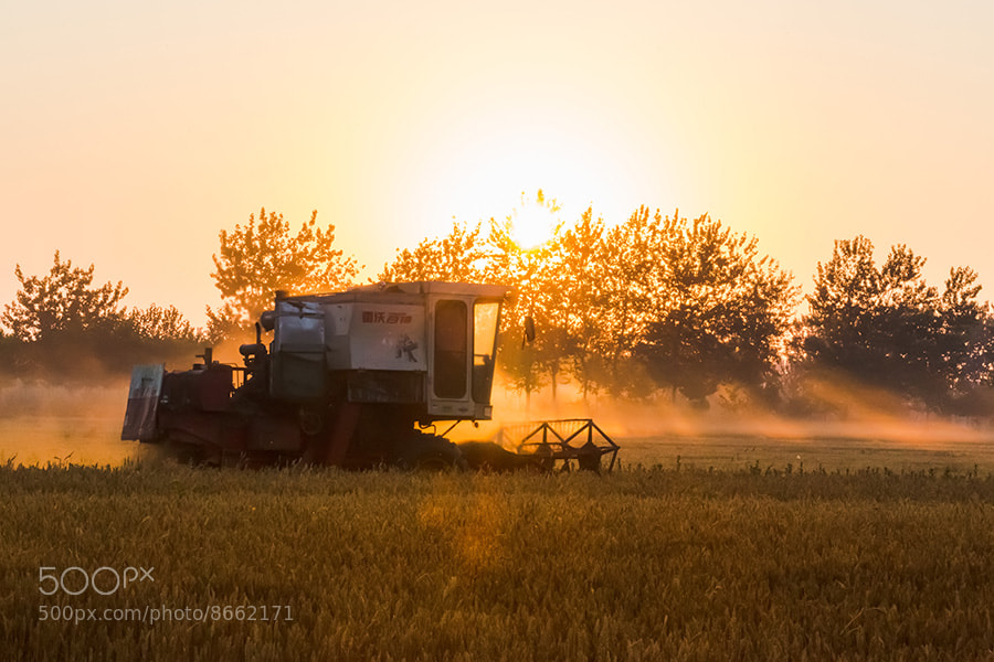 Photograph wheat harvest by Song Hongxiao on 500px