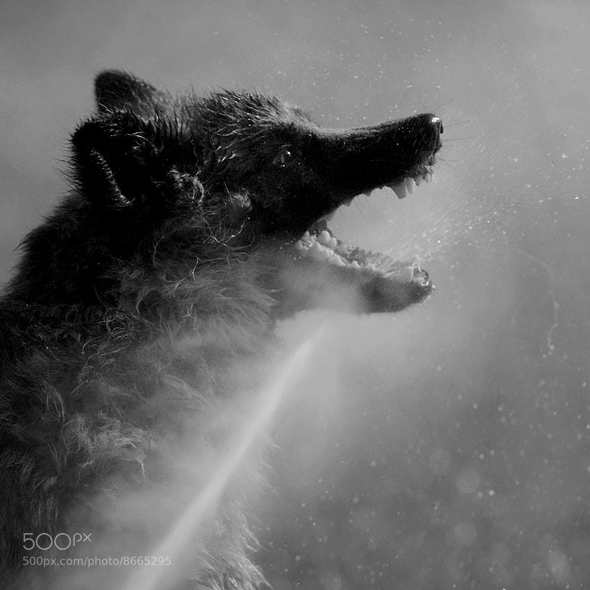 Photograph grab a drop by Sebastian Luczywo on 500px