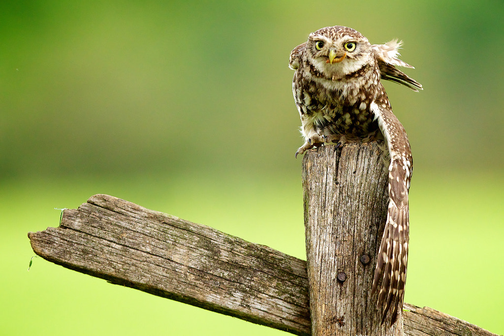 Photograph and stretch... by Mark Bridger on 500px