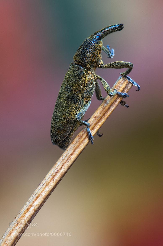 Photograph Gorgojo by Francisco Yudici on 500px
