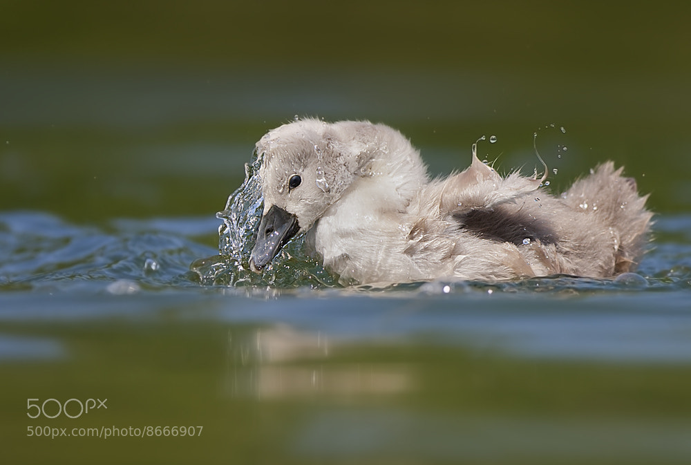 Photograph In the water by Stefano Ronchi on 500px