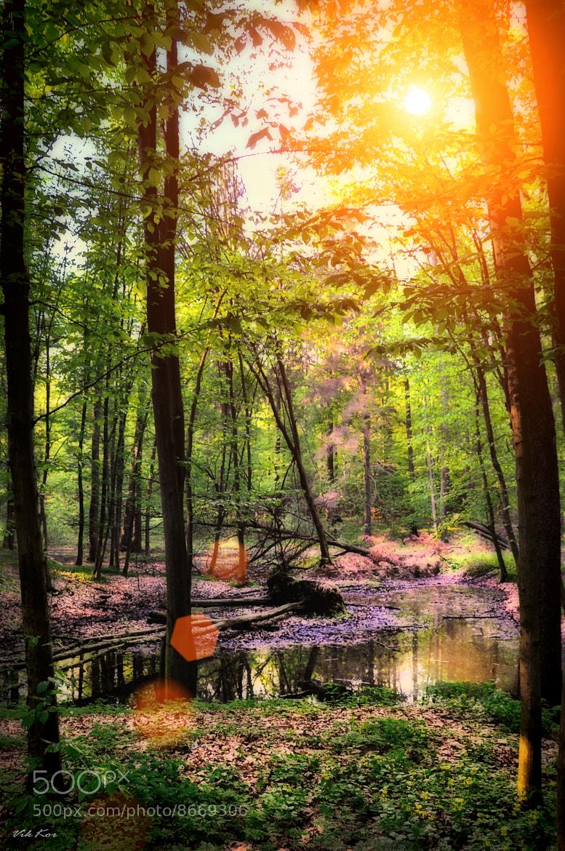 Photograph Forest by Viktor Korostynski on 500px