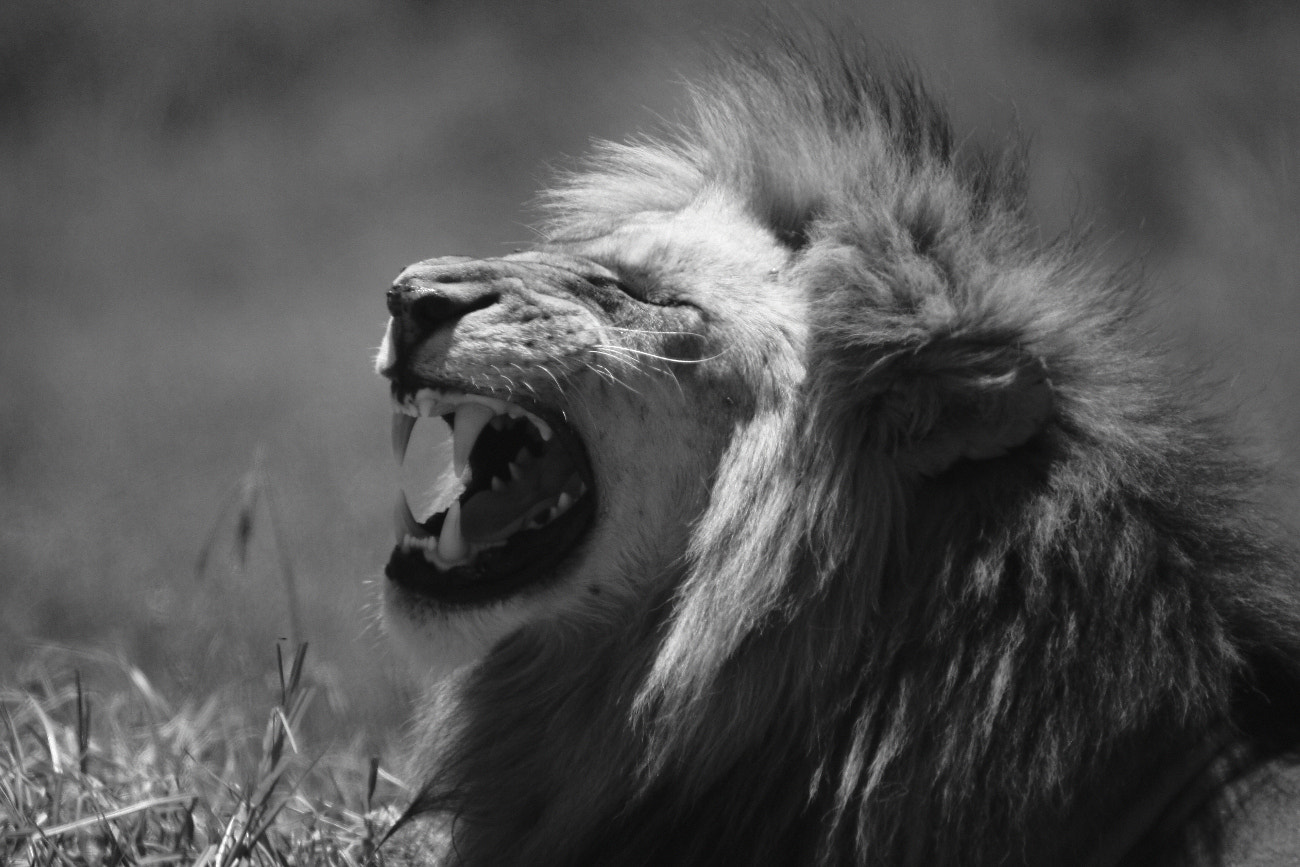 Photograph No laughing matter. by Henk Botha on 500px