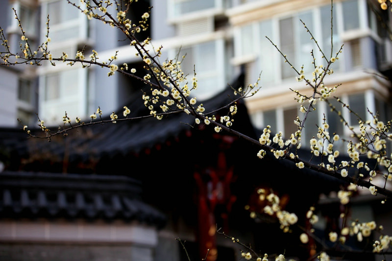 Photograph Pear Blossom Downstairs by Chen suyu on 500px