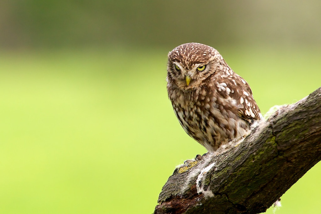 Photograph a little frown.. by Mark Bridger on 500px