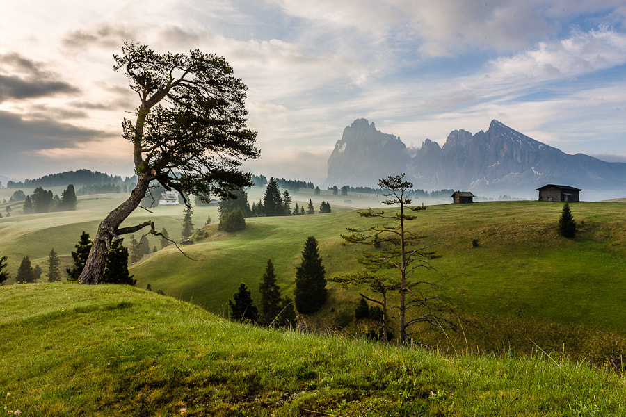 Photograph A study in Alpe di Siusi by Hans Kruse on 500px