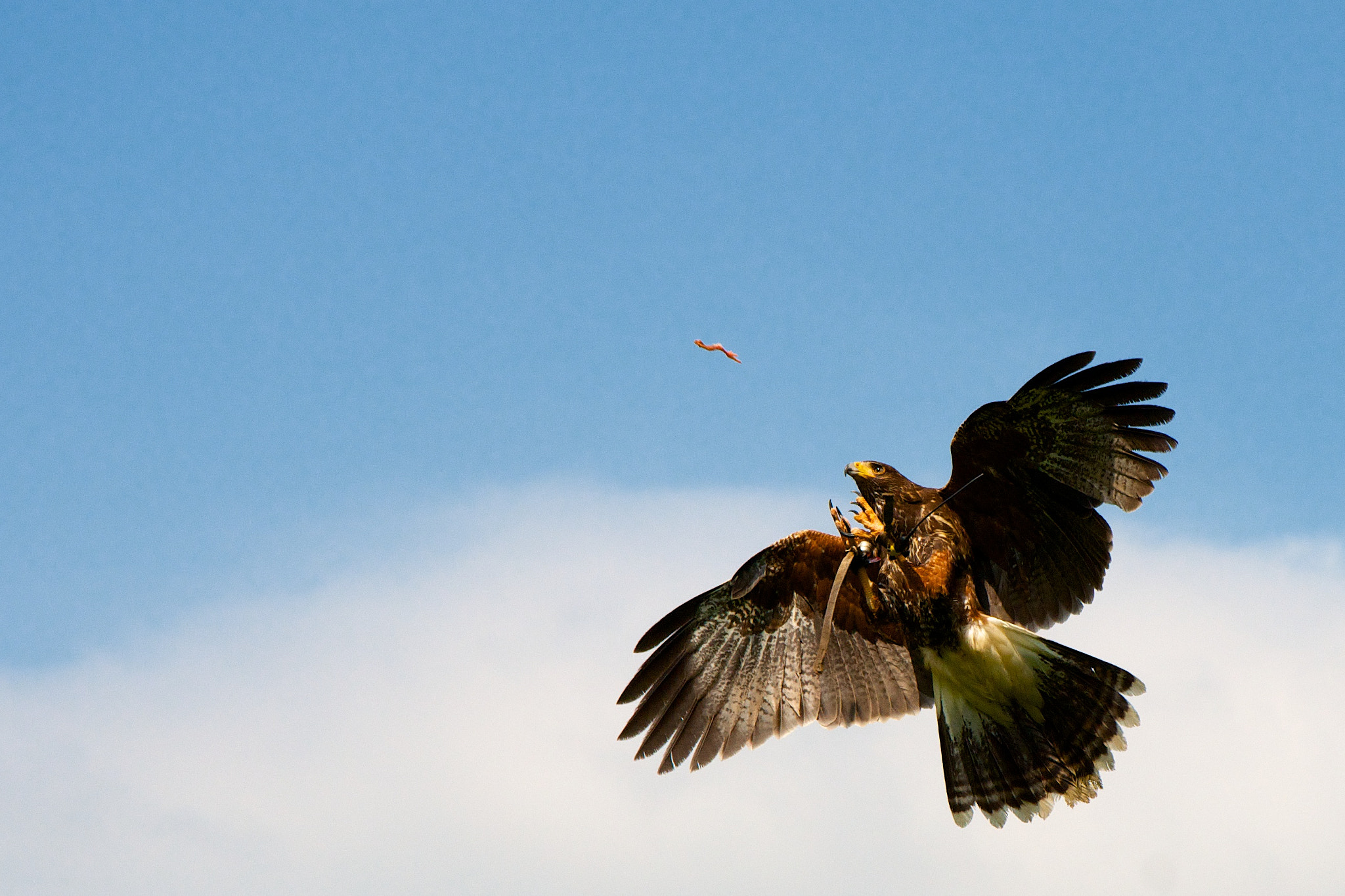 Photograph The Catch by Martin P. on 500px