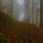 ������, ������: leaves on a forest path