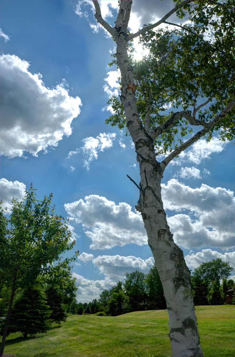 Photograph Birch Tree in Spring by MICHAEL GOFFIN on 500px