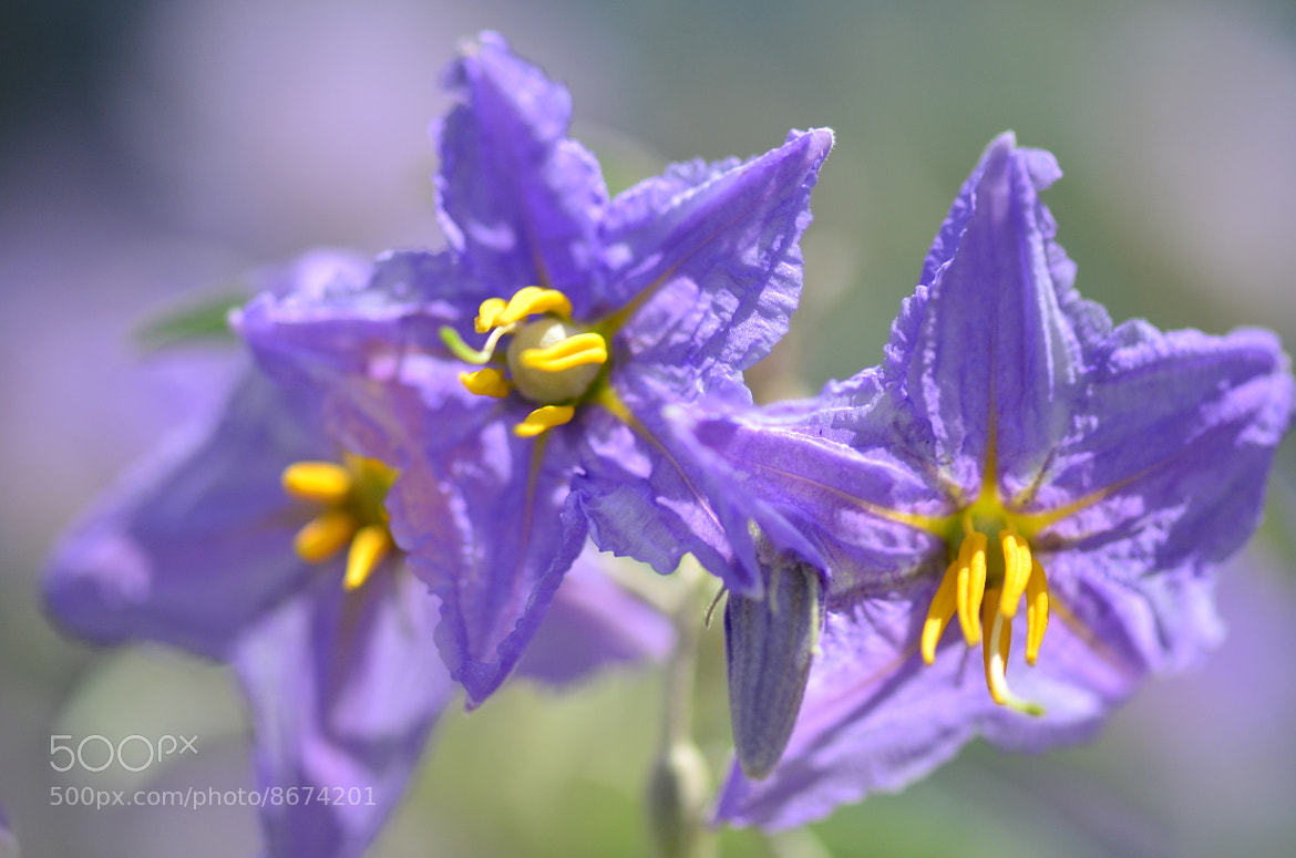 Photograph purple and yellow by Liora Levin on 500px