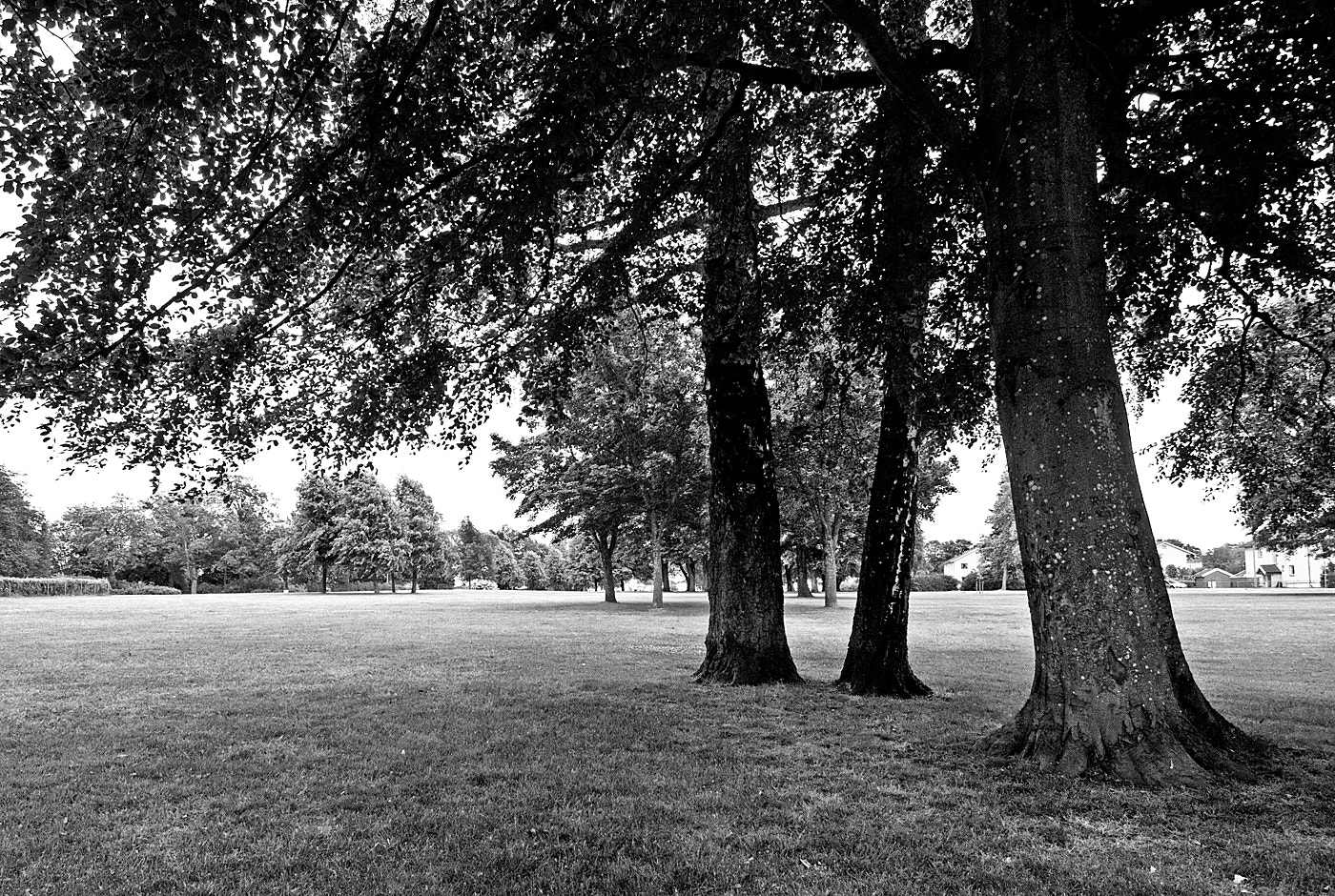 Photograph Black and white in the park by Ragnar Gjemmestad on 500px