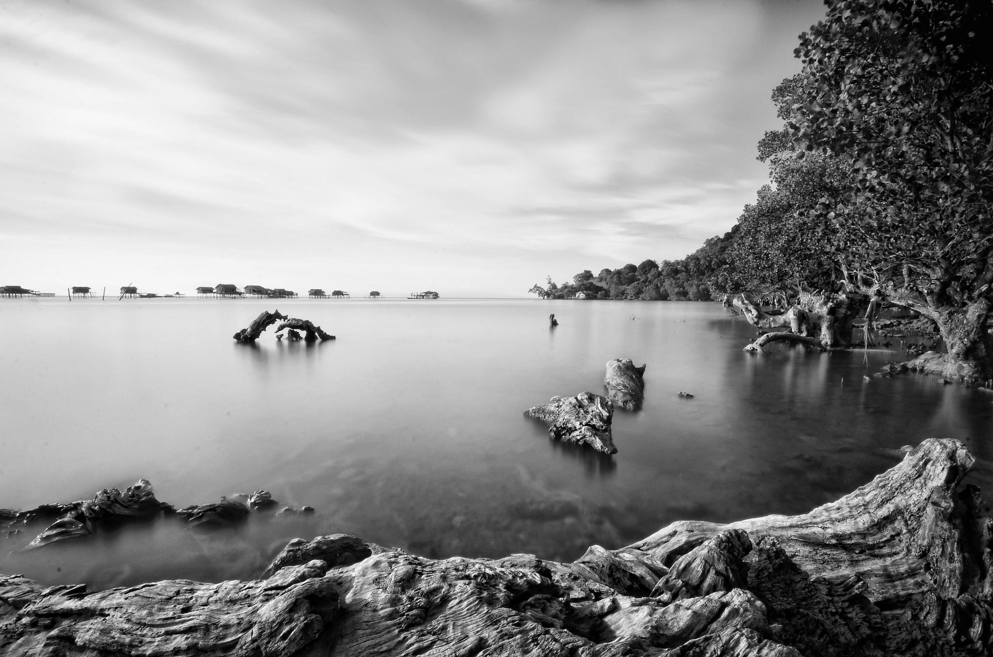 Photograph The Root by darmin ladiro on 500px