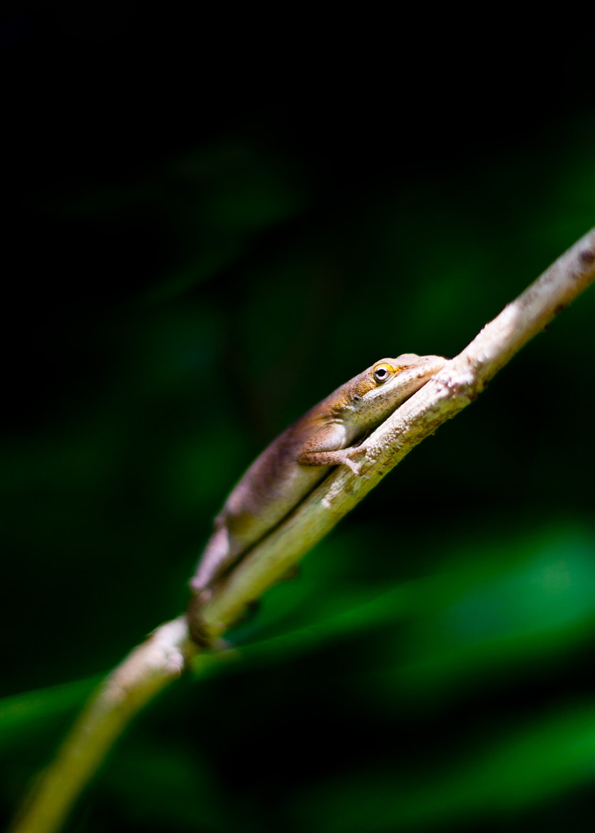 Photograph Lizard by Stephen Miller on 500px