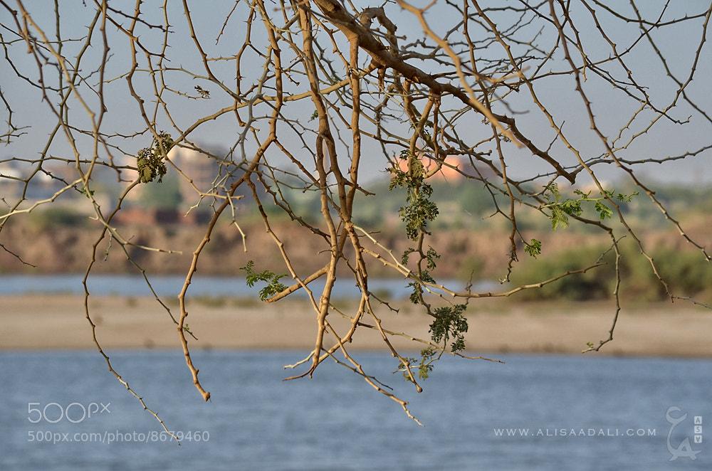 Photograph Tutti Island  by Ali Saad Ali on 500px