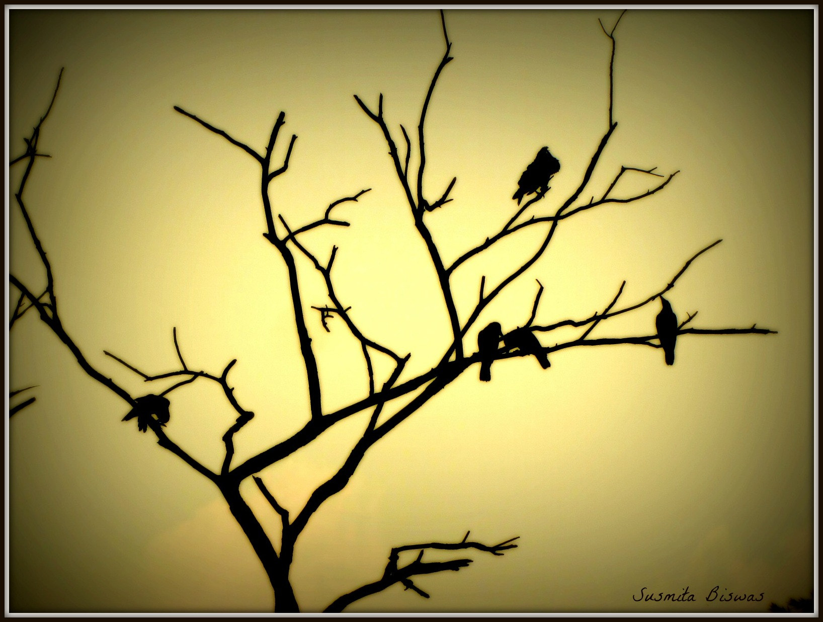 Photograph Yellow Tale.. by Susmita Biswas on 500px