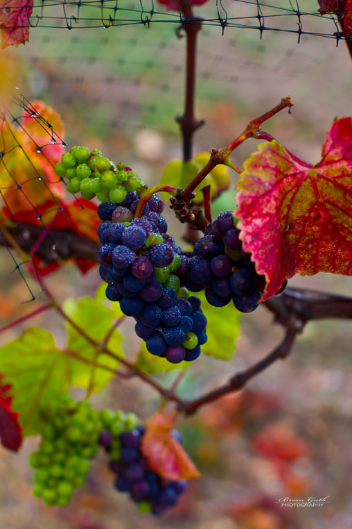 Photograph Almost Wine by Brian  Guth on 500px