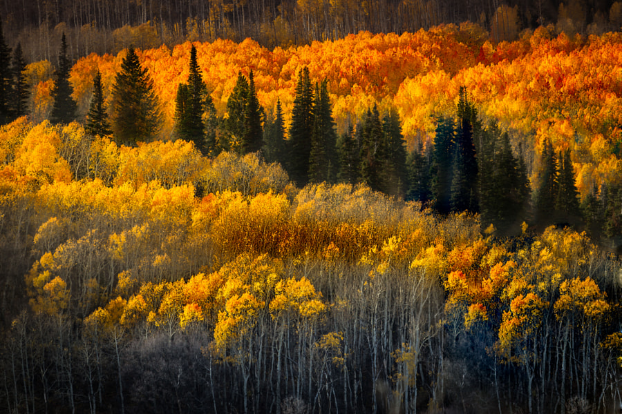 Photograph The Magic of Utah's Park City by Suresh Reddi on 500px