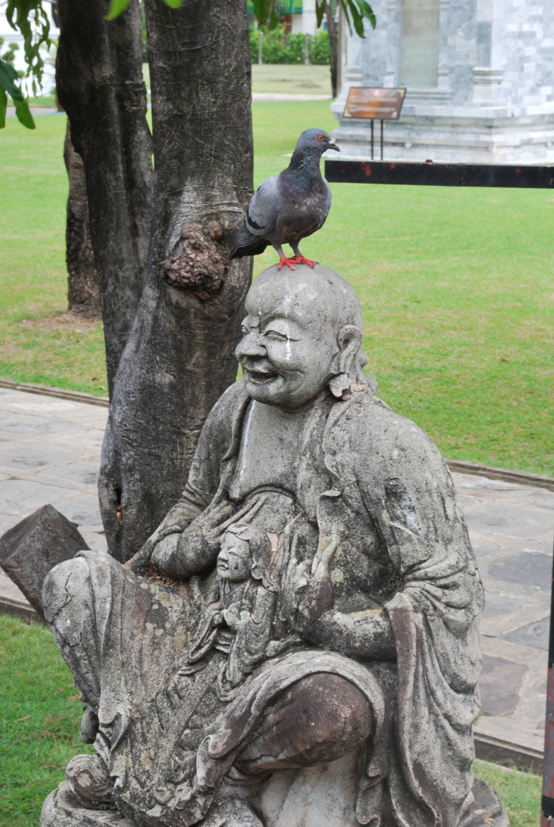 Photograph budha and the bird by Tolga Durgun on 500px