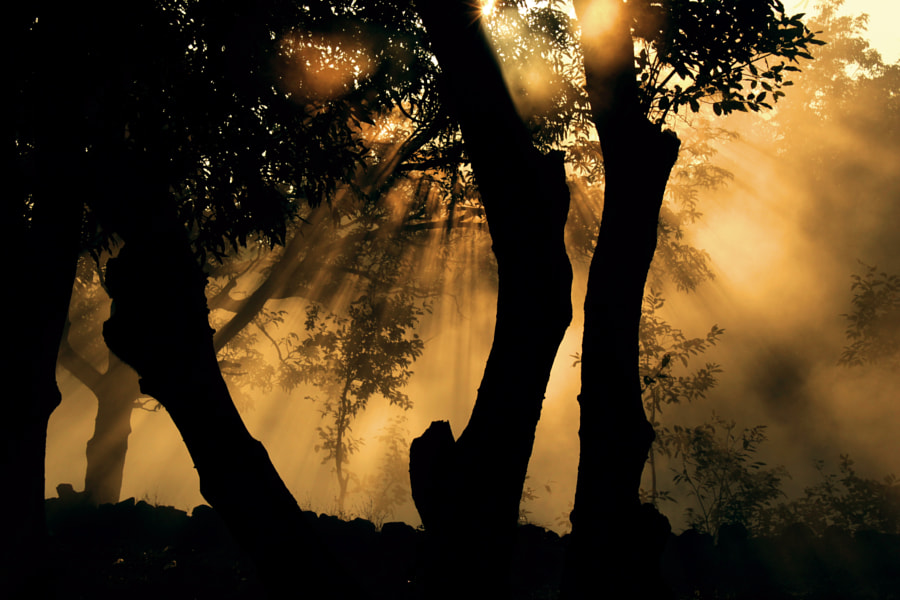 Photograph jungle trees under sun light by vishal Rane on 500px