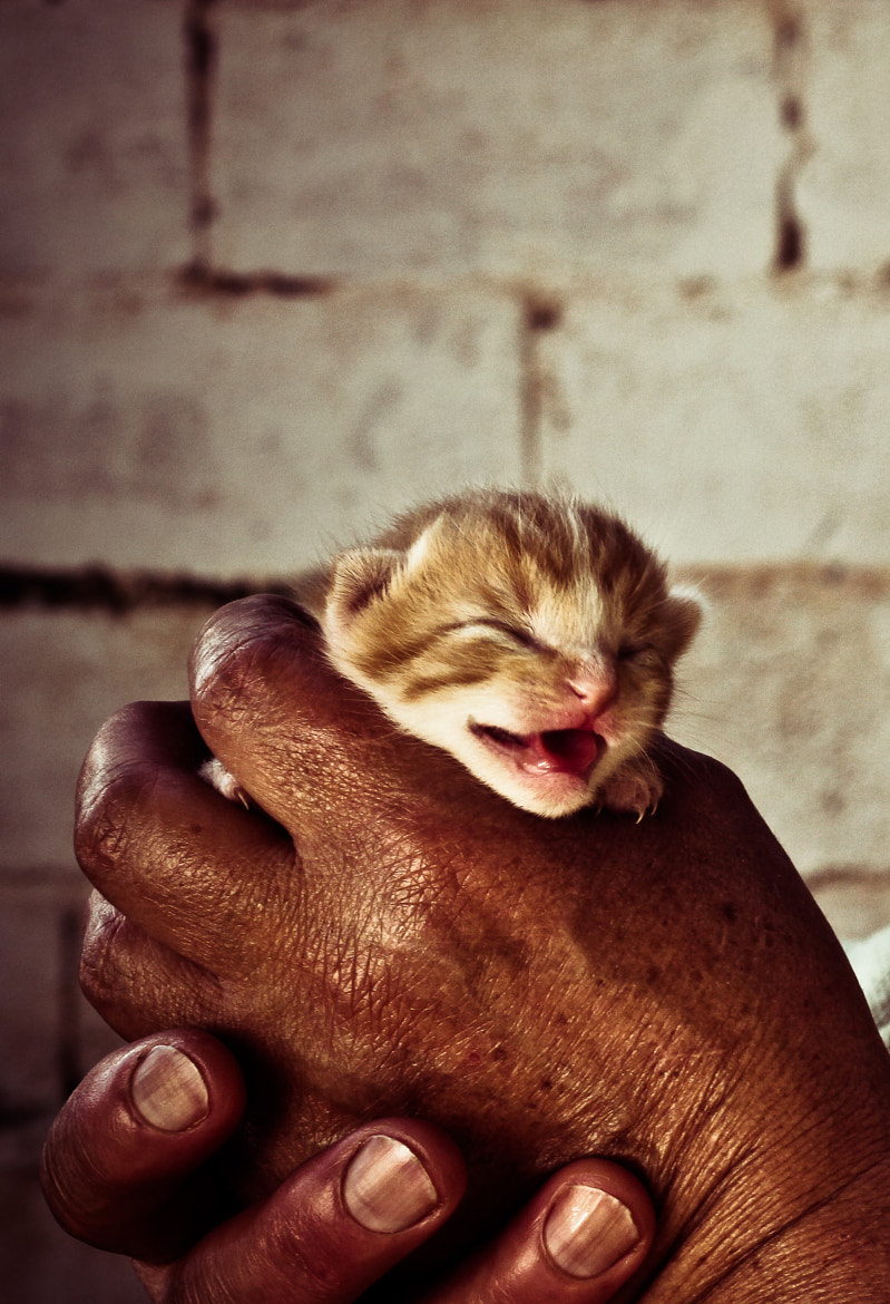 Photograph Kitten by Cristina Gelio on 500px