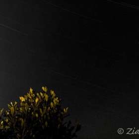 Star Trail by Ziad M. A. (ZiadAdada)) on 500px.com