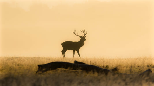 Morning Stag by 500px on 500px