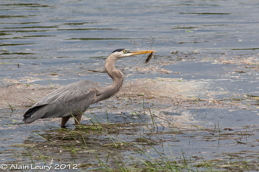 Photograph Fishing along by Alain Leury on 500px