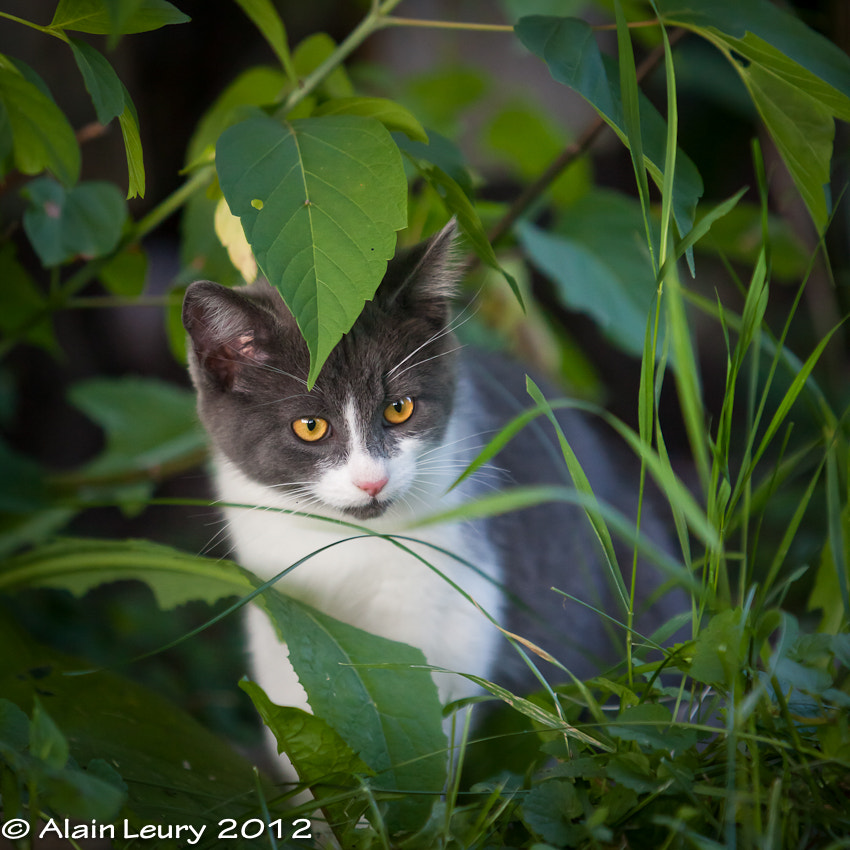 Photograph Kitten exploring by Alain Leury on 500px