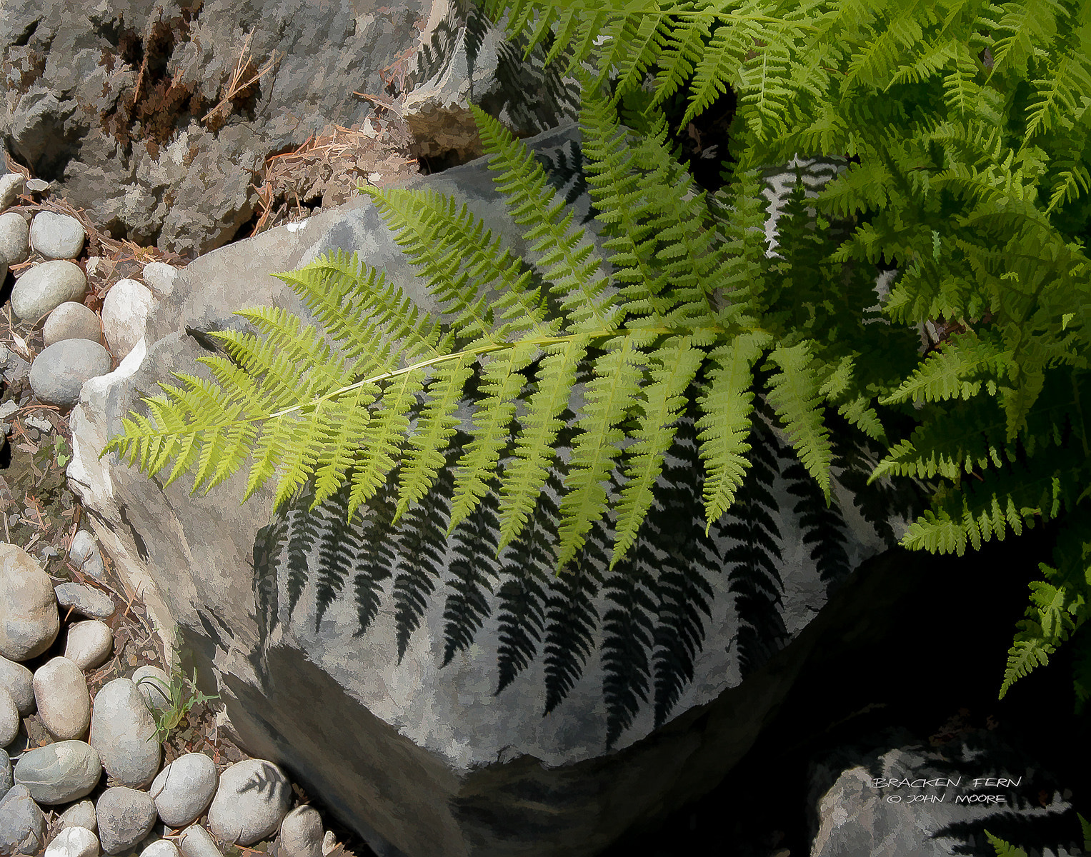 Photograph Bracken Fern by John Moore on 500px