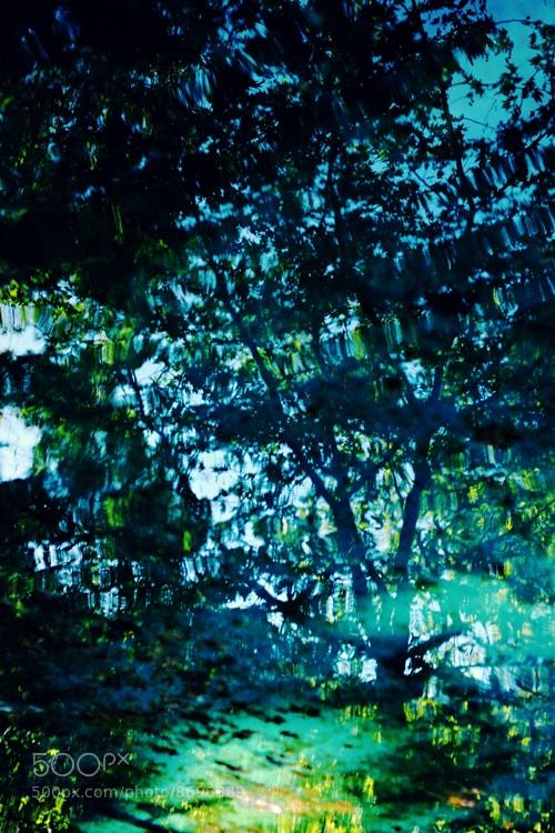 Photograph tree by Özlem Akekmekci on 500px