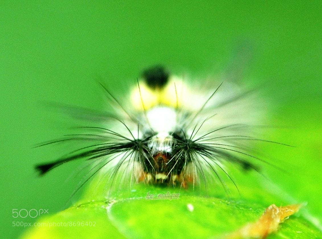 Photograph caterpillar by Mohd Azli Abdul Malek on 500px