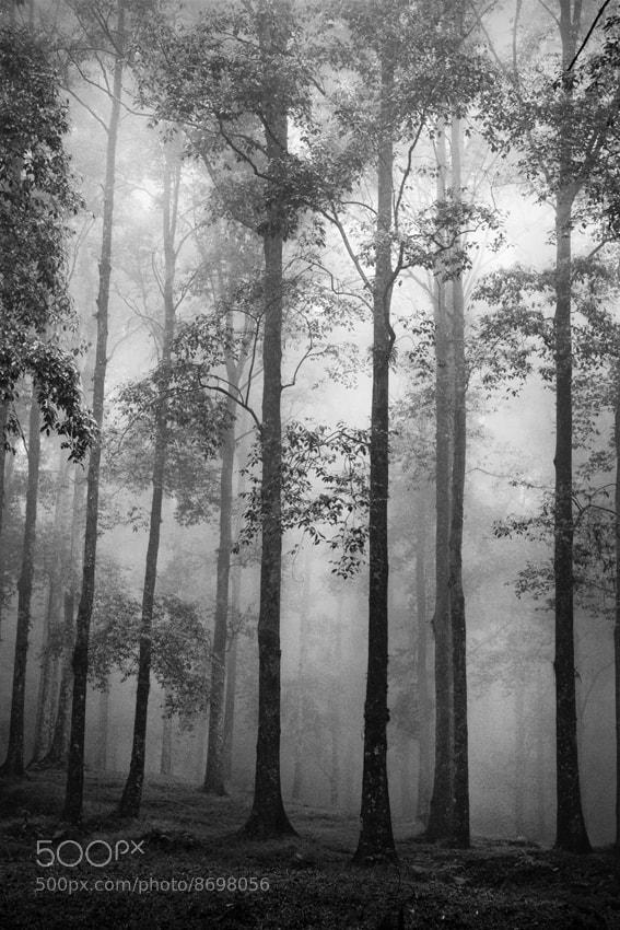 Photograph Undisturbed by Hengki Lee on 500px