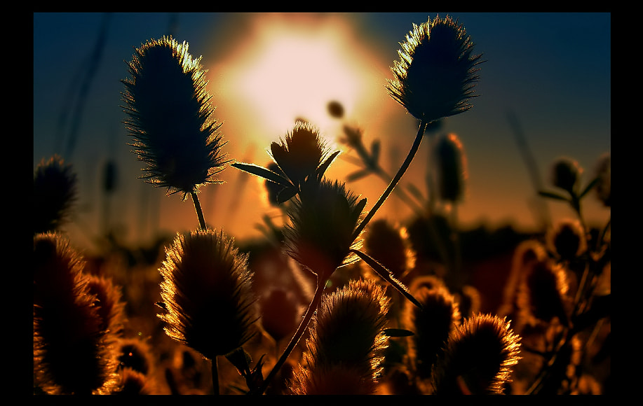 Photograph Poland Summer by EMERALD WAKE © on 500px