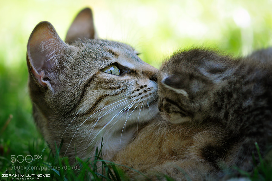 Photograph Hold Me, Mommy! by Zoran Milutinovic on 500px