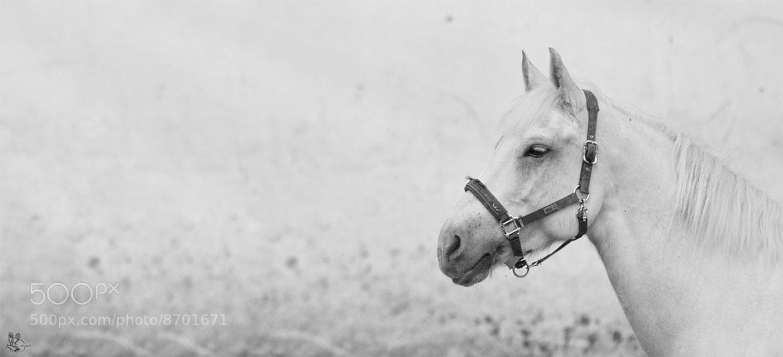 Photograph B&W by Pavel Morozov on 500px