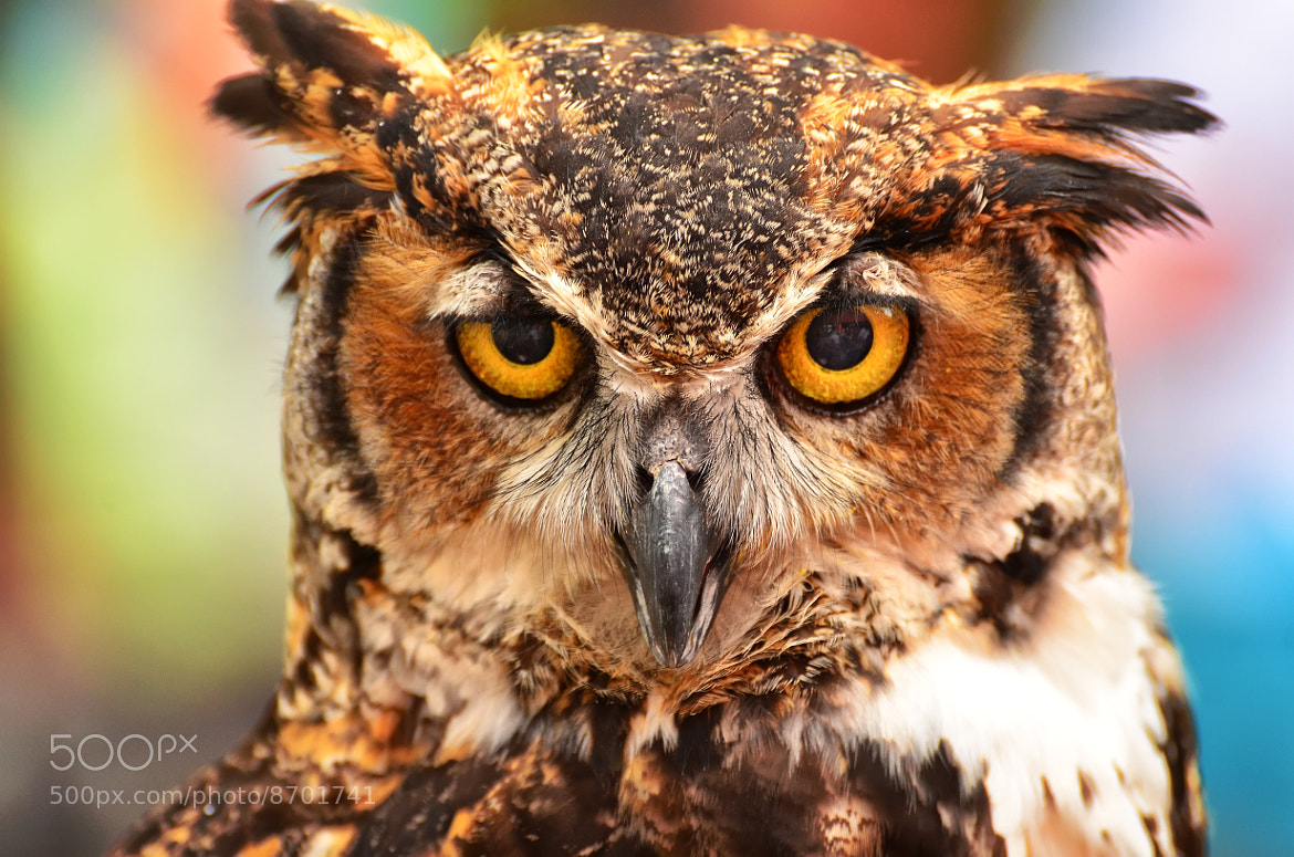 Photograph The Stare Down by Jeff Clow on 500px