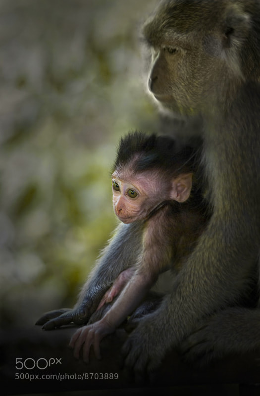 Photograph Mother's arms by Saelan Wangsa on 500px