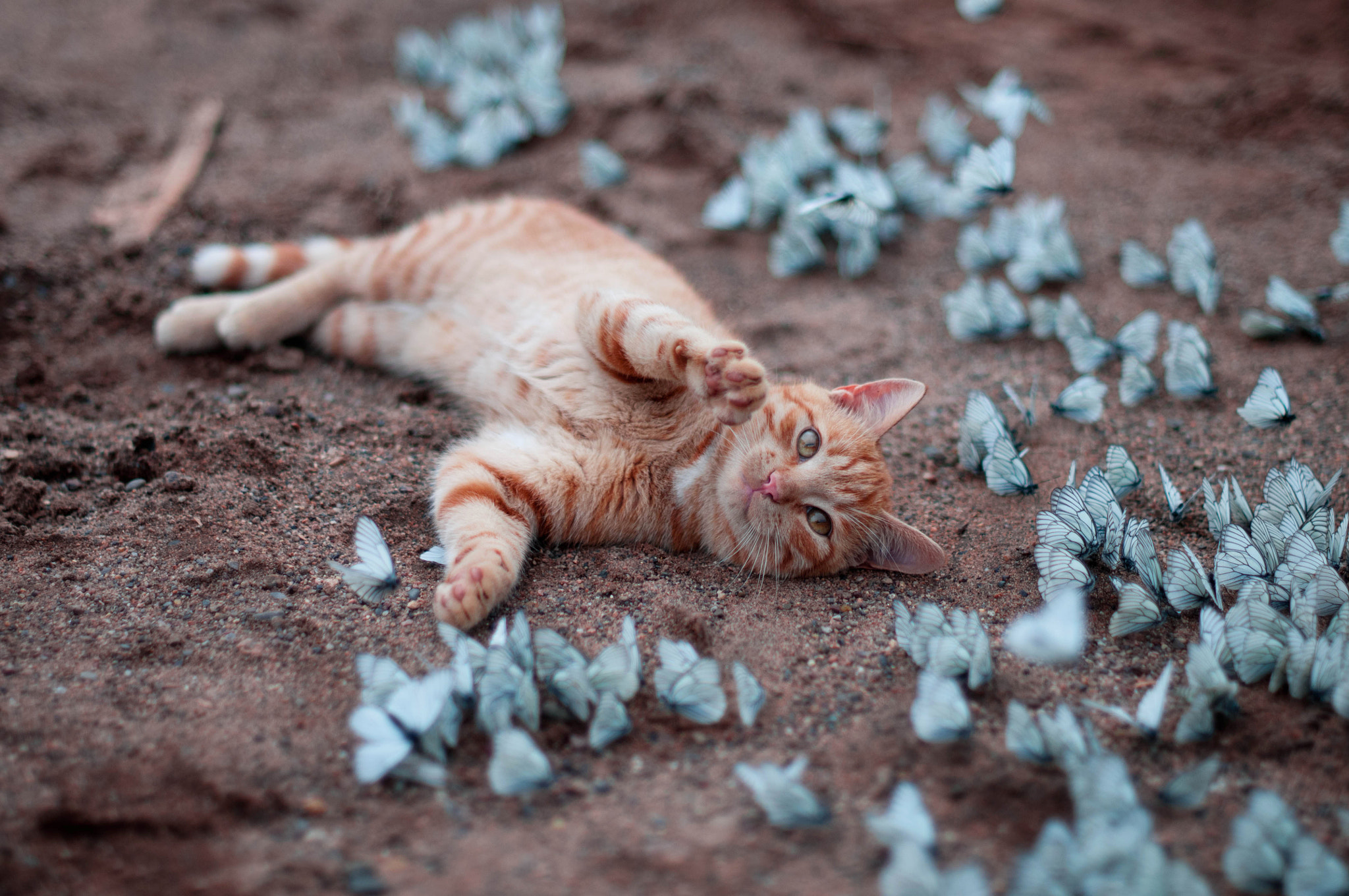 Photograph Cat and Butterflies by Natalia Moldovanova on 500px